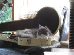 This cat loves everything about the banjo!