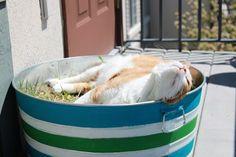 from GARDNERS 2 BERGERS: ✥ Condo Cat's Backyard ✥... My kitty needs this!!!