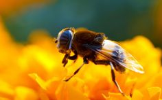 Millions of bees were found dead after GMO corn was planted just a few weeks ago in Ontario, Canada, likely due to pesticides known as neonicotinoids.