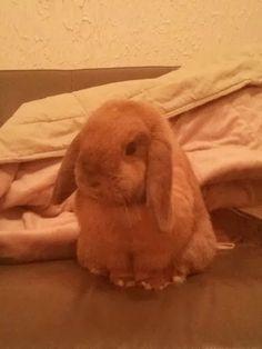 Fiona the bunny