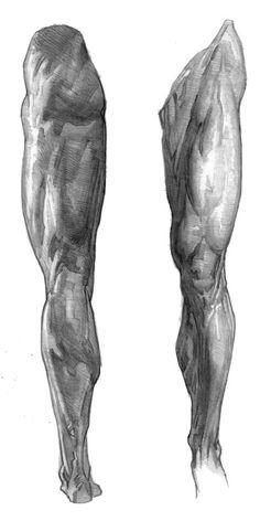Human Figure Drawing Reference E. Human Anatomy Drawing, Human Figure Drawing, Figure Drawing Reference, Body Drawing, Anatomy Reference, Art Reference Poses, Leg Anatomy, Anatomy Sculpture, Anatomy Sketches