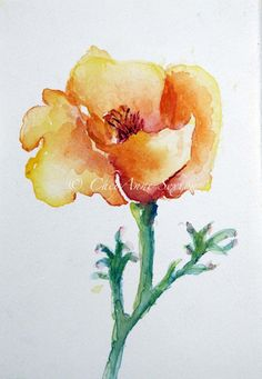 watercolor - California Poppy blossom   by CheyAnne Sexton