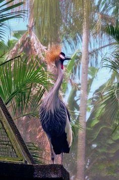 Egret golden crest II by wees1 #D90,bali,birds,crested,heron,landscape,nature,nikon,park,zoo,animals pic.twitter.com/UIoaR07tlI
