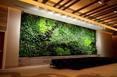 Green walls clean the air and remove VOC's.  #GreenstreetGreenWalls