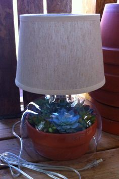 Terrarium Lamp From Target!  Succulents  2 much fun!