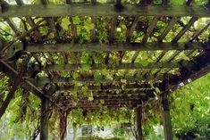 Double-duty design. A vine-laden arbor provides shade for an outdoor dining room and heaps of fresh table grapes. These vigorous vines aren't too fussy about soil, can withstand periods of drought once established and, other than annual pruning and a little tying up, require little maintenance. Consider planting several varieties of grape on a large arbor for a cornucopia of fresh fruit.