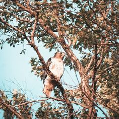 Went to check out @sandbox_organics farm.  It had some cool neighbors . . . . .  #birdsofinstagram #animalsmood #kings_birds #birdwatching #bestbirdshots #birdstagram #nature_brilliance #EarthVisuals #artofvisuals #welivetoexplore #natureaddict #naturediversity #mychicagopix #midwestmoment #insta_chicago