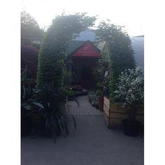 Граб обыкновенный Carpinus betulus ARCA Gazebo, Flora, Outdoor Structures, Garden, Kiosk, Garten, Plants, Gardens, Cabana