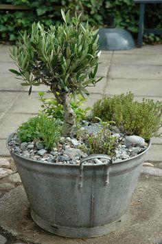 MEERESZEIT: Gartenfreude – Pflanzen ideen – Keep up with the times. Herb Garden, Indoor Garden, Garden Pots, Outdoor Gardens, Garden Fun, Pink Garden, Garden Sheds, Shade Garden, Container Flowers