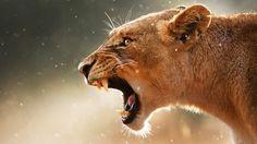 Animal Fight Night - Nat Geo WILD