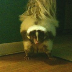 who would want to get this close to a skunk to take it's picture?? YOU'RE CRAZY!!!!