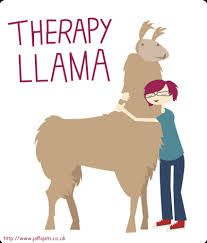 Image result for llama therapy
