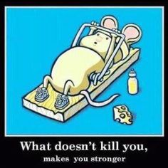 The early bird catches the worm but the second mouse gets the cheese...