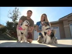 ▶ Dogs on Deployment: Compassion Makes a Difference - YouTube