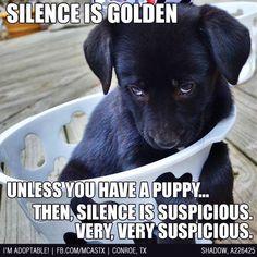 Adorable black lab puppy humor