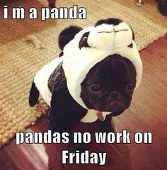 i m a panda... pandas no work on Friday... Happy Friday Everyone!