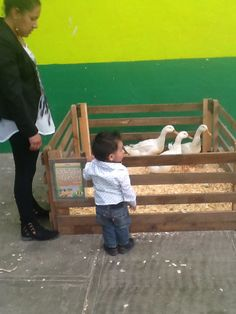 Los patos,famosos riñones llenos de agua!!