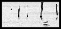 Ensayos de viajes y actualidad - Travel Essays: La combinación perfecta:Fauna y fotografía en Tierra del Fuego