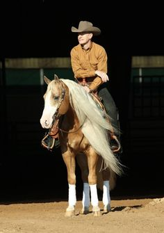 Smart n Shiney reining horse