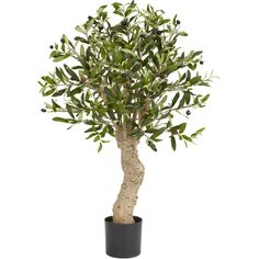 Olive Silk Tree Artificial Realistic Nearly Natural Home Garden Decoration for sale online Fake Trees, Potted Trees, Trees And Shrubs, Silk Plants, Fake Plants, Indoor Plants, Faux Olive Tree, Boxwood Topiary, Silk Tree