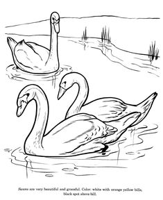 Swan drawing and coloring page
