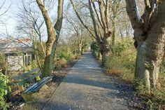 Gemeente zet mes in bomen Emmapark en Westereiland