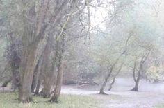 Märchenwald, FOTO von GIMOOTO, Motiv gedruckt auf Künstlerleinwand
