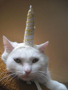 unicorn disguise. Cat: you know I hate you for this...I will puke on your rug for this.