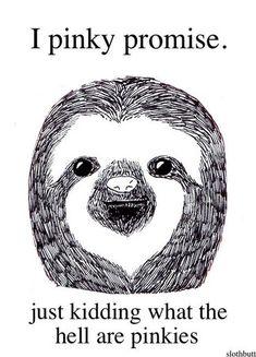 4a6bcd95ae4f6c5215d0d3ce2aa0c56c--sloth-humor-funny-sloth.jpg 630×875 pixels