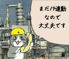 Neko, Jokes, Cats, Funny, Poster, Fictional Characters, Gatos, Husky Jokes, Memes