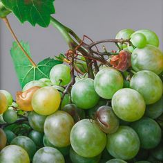 Grapes III | From a unique collection of paintings at https://www.1stdibs.com/art/paintings/