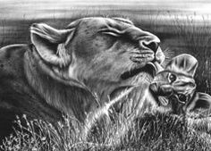 Graphite Drawings - Lion and Cub  by Jerry Winick