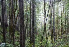 Title: Through The Trees Artist: Belinda Greb Medium: Photograph - Photographs