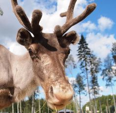 Science explains Rudolph's red reindeer nose    Leave it to a bunch of scientists to figure out one of the holiday season's greatest mysteries: why Rudolph is a red-nosed reindeer.