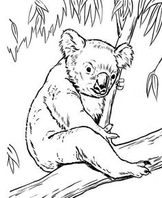 Coloring Koala Bear Eucalyptus Tree Page Color Lu With White Stock Images Royalty Free Vectors On