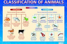 invertebrates classification for kids - Buscar con Google