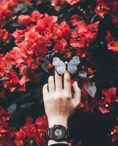 Image about nature in beautiful by rania on We Heart It Hand Photography, Creative Photography, Amazing Photography, Red Aesthetic, Aesthetic Pictures, Landscape Illustration, Illustration Art, Butterfly Wallpaper, Aesthetic Wallpapers