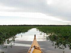 excursion-en-kayak16