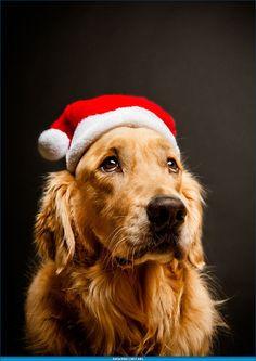Потрясающие Рождественские фотографии | Время фотографии