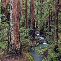 Meander between the Redwoods in #Mendocino, a northern California getaway.