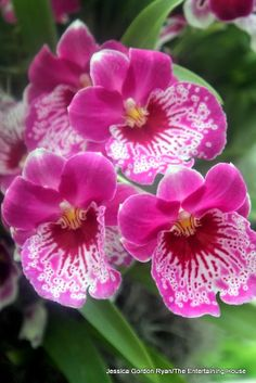 The Entertaining House: A day in Paradise :: The Orchid Show at The New York Botanical Garden
