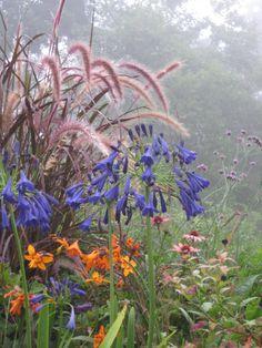Amber delight, student garden at Longwood Gardens, Kennett Square, Pennsylvania