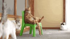Daily Cat GIFs