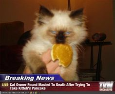 Cat Owner Found Mauled To Death After Trying To Take Kitteh's Pancake