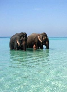 See elephants wading in the water at Radhanagar Beach, Havelock, Andaman and Nicobar Islands
