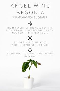 A Complete Guide to Lighting For Your Indoor Plants Quiz Vintage Revivals Low Light Bright Indirect Full Sun learn what plant lighting means and the plants that thrive in them Understand the lighting conditions in YOUR home houseplants plantlighting House Plants Decor, Plant Decor, Low Maintenance Indoor Plants, Low Light Plants, Pot Plante, Plant Lighting, Garden Types, Veg Garden, Bedroom Plants