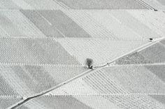 vineyard near Ebringen in the southern German state of Baden-Württemberg