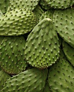 Nopales are a veggie made from the pad segments of a prickly pear. Find recipes using nopales in 'The Latin Road Home'