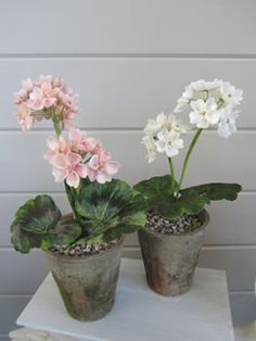 geranium made from shells - karen robertson