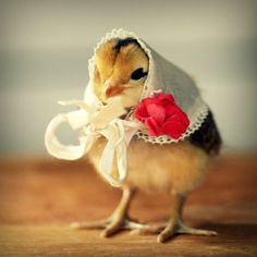 haha :) Chicks in Hats Magnet This Will Make Your Refrigerator Happy. $3.00, via Etsy.